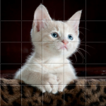 Download Picture Puzzle Free Game For Android 2.2 APK For Android