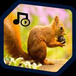Download squirrel ringtones, squirrel sounds 1.2 APK For Android