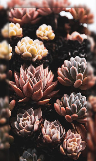 Download 4K Nature Wallpapers 1 APK For Android
