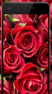 Download Rose Wallpaper, Floral, Flower background : Rosefy 1.9 Apk for android