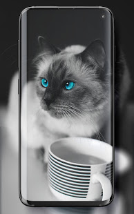 Download Cute Cats Live Wallpaper 5.1 Apk for android