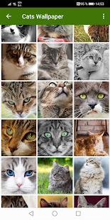 Download Cats Wallpapers 1.0.cats Apk for android