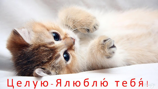 Download Russian Love Messages & Love Quotes 4.18.03.0 Apk for android